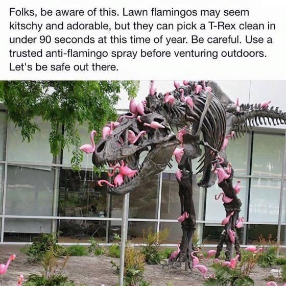 flamingo attack