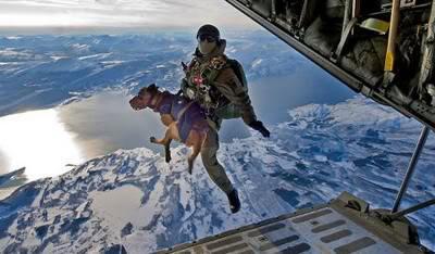 war dogs2