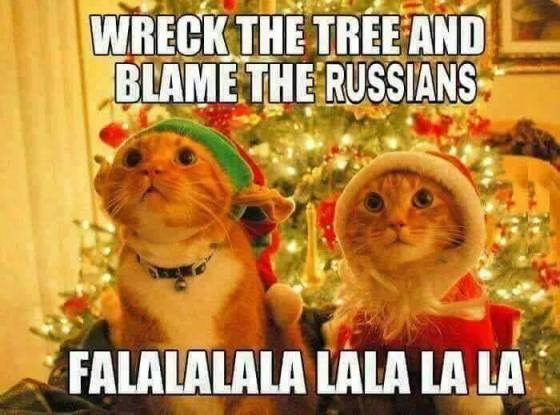 russian-cats